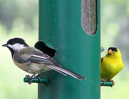 http://mainecourse.com/mt/archives/images/two_bird.jpg